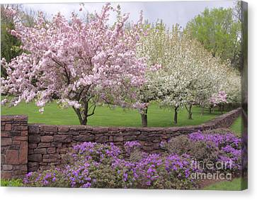Powder Hill Blossoms Canvas Print by Cindy Lee Longhini