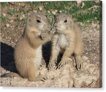 Prairie Dog Duo Canvas Print by Michelle H