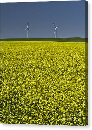 Prairie Generations Canvas Print by Royce Howland