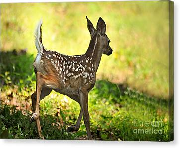 Canvas Print featuring the photograph Prancing Fawn by Nava Thompson
