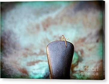 Praying For Water 2 Canvas Print by Andee Design