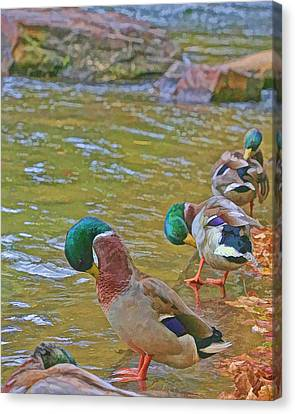 Canvas Print featuring the photograph Preening Drakes In A Row by Gregory Scott