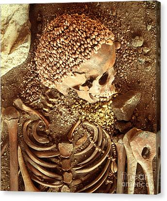Prehistory Skeletal Remains Canvas Print by Tomsich