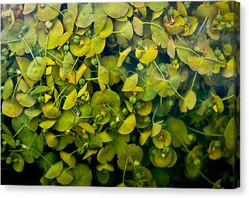Pressing Canvas Print by Lynn Wohlers
