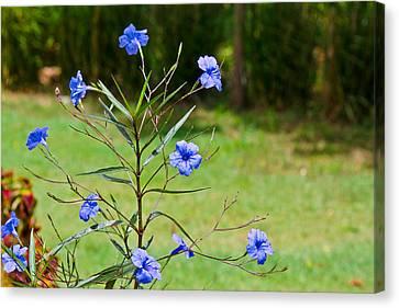 Pretty Blue Flowers Canvas Print by David Alexander