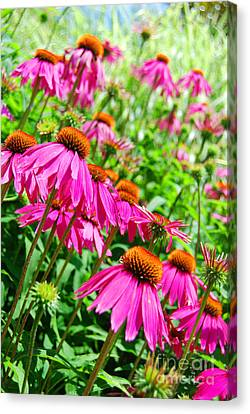 Pretty In Pink Canvas Print by Linda Mesibov