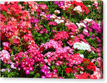 Canvas Print featuring the photograph Pretty In Pink by Paul Svensen