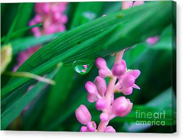 Pretty In Pink  Canvas Print by Peggy Franz