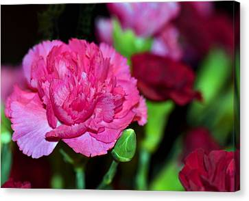 Pretty In Pink Canvas Print by Sandi OReilly