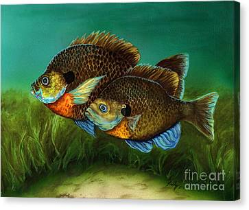 Pretty Little Panfish Canvas Print