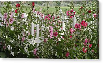 Pretty Picket Canvas Print by Elizabeth Sullivan