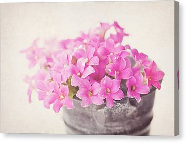 Pretty Pink Canvas Print by SKCPhotography
