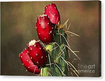 Prickley Pear Fruit Canvas Print by Donna Greene