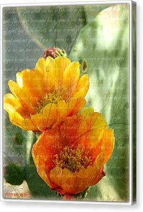 Prickly Pear Blooms Canvas Print