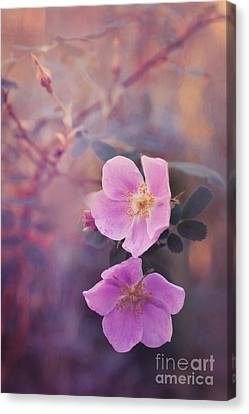 Prickly Rose Canvas Print