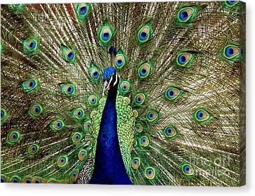 Canvas Print featuring the photograph Pride  by Johanne Peale