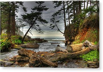 Primal Creek Canvas Print