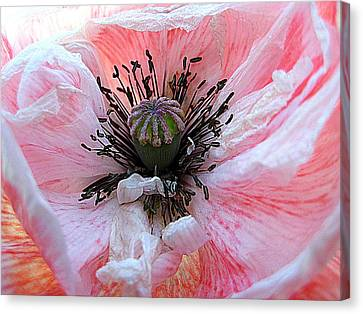 Prime Time Canvas Print by Shirley Sirois
