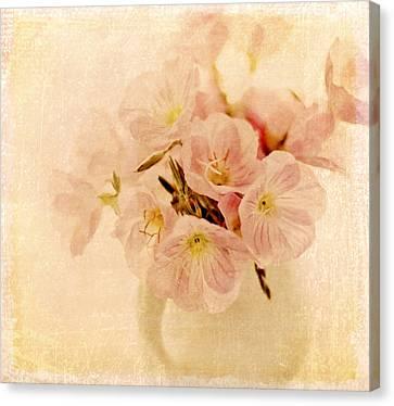 Pink Primroses Canvas Print - Primrose Delights by Linde Townsend