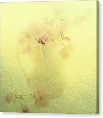 Primrose In Pastel Canvas Print by Linde Townsend