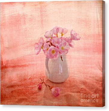 Pink Primroses Canvas Print - Primroses D'orange by Linde Townsend