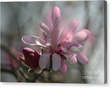 Pristine Pastels Canvas Print by Living Color Photography Lorraine Lynch