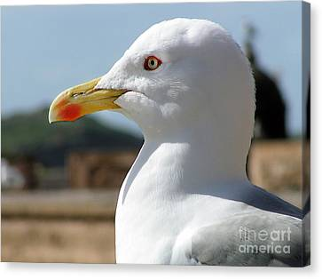 Canvas Print featuring the photograph Profile Of A Seagull  by Alexandra Jordankova