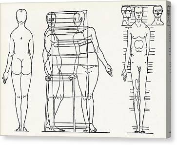 Proportions Of The Human Body Canvas Print by Sheila Terry