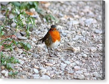 Proud Little Bird Canvas Print by Rogerio Mariani