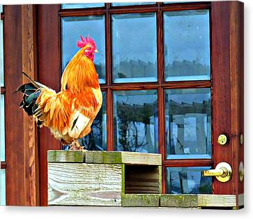 Proud Rooster Canvas Print by Jo Sheehan