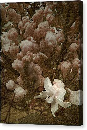 Pruning Lilacs Canvas Print by Lianne Schneider