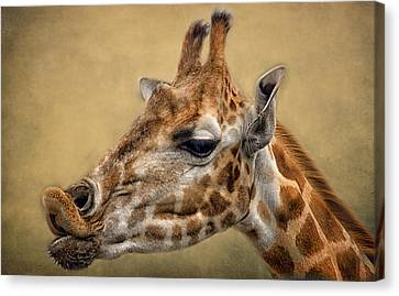 Pucker Up Canvas Print by Fiona Messenger