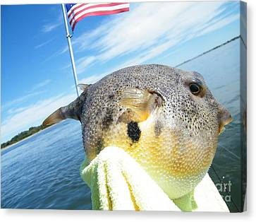 Puffer Love Canvas Print by Laurence Oliver