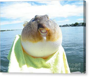 Puffer Smile Canvas Print by Laurence Oliver