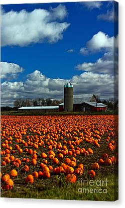 Pumpkin Farm Canvas Print by Randall  Cogle