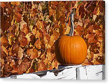 Grapevines Canvas Print - Pumpkin On White Fence Post by Garry Gay