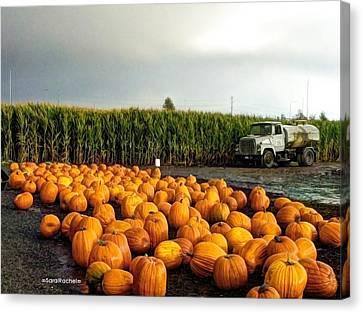 Pumpkin Patch Round Up Canvas Print by Sarai Rachel