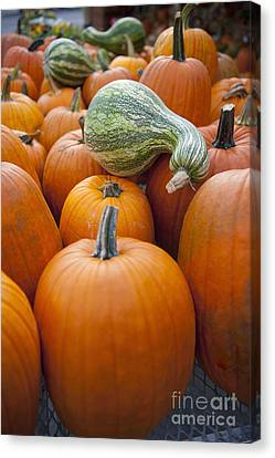 Salt Air Canvas Print - Pumpkins For Sale by Thom Gourley/Flatbread Images, LLC