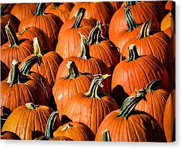 Pumpkins Galore Canvas Print by Julie Palencia