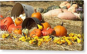 Pumpkins Canvas Print by Laurie Kidd