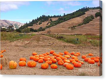 Canvas Print featuring the photograph Pumpkins Of Marin by K L Kingston