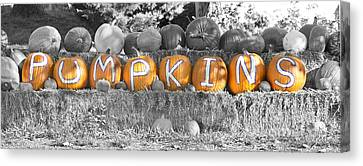 Pumpkins P U M P K I N S Bwsc Canvas Print by James BO  Insogna