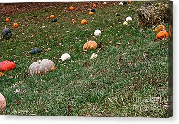 Pumpkins Canvas Print by Susan Herber