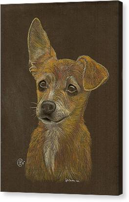 Pup Canvas Print by Stephanie L Carr