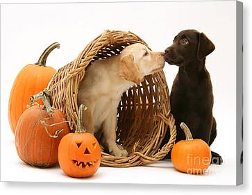 Puppies At Halloween Canvas Print