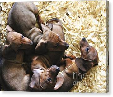 Puppies Canvas Print by Brian  Seidenfrau
