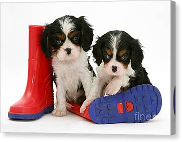 Puppies With Rain Boats Canvas Print by Jane Burton