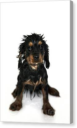 Puppy Bathtime Canvas Print by Jane Rix