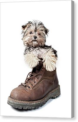 Puppy In A Boot Canvas Print by Chad Latta