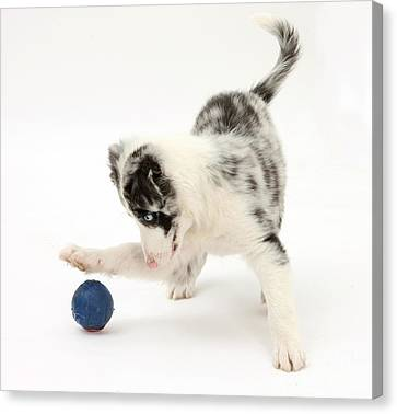 Puppy Playing With A Ball Canvas Print